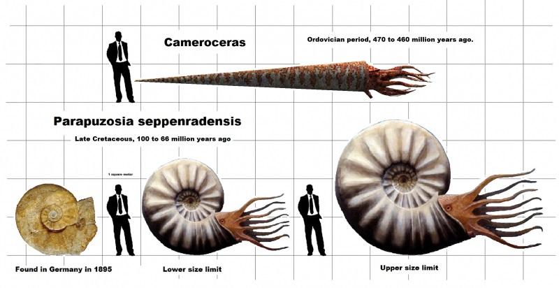 24thscaleCamerocerasandParapuzosia